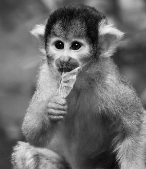 monkeyscottstake